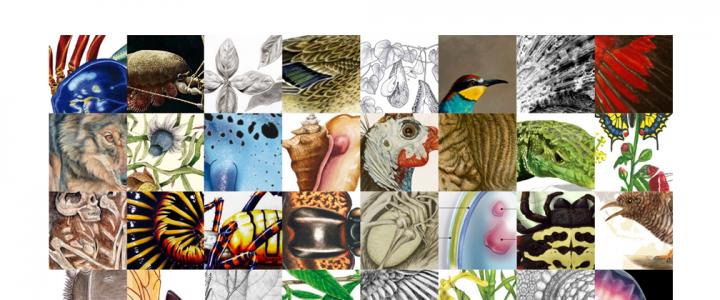 Exposició Il·lustraciència: Premi internacional d'il·lustració científica