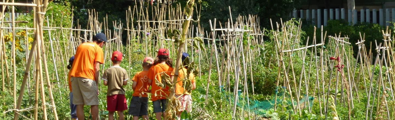 Descoberta i aprenentatge per a la sostenibilitat