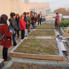 Cobertes verdes: terrats vius