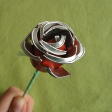 Per Sant Jordi… roses sense espines