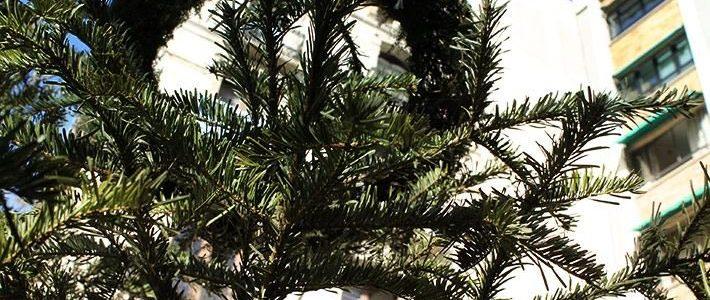 Com tenir un Nadal + sostenible?