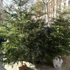 Reciclem els arbres de Nadal